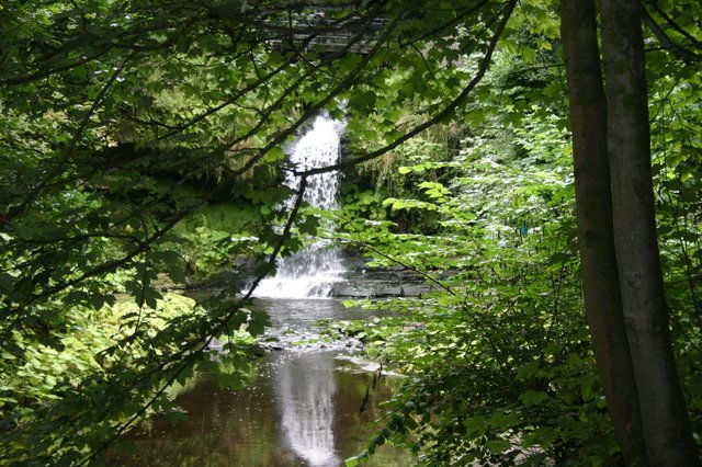The trees and waterfalls of Westquarter Glen