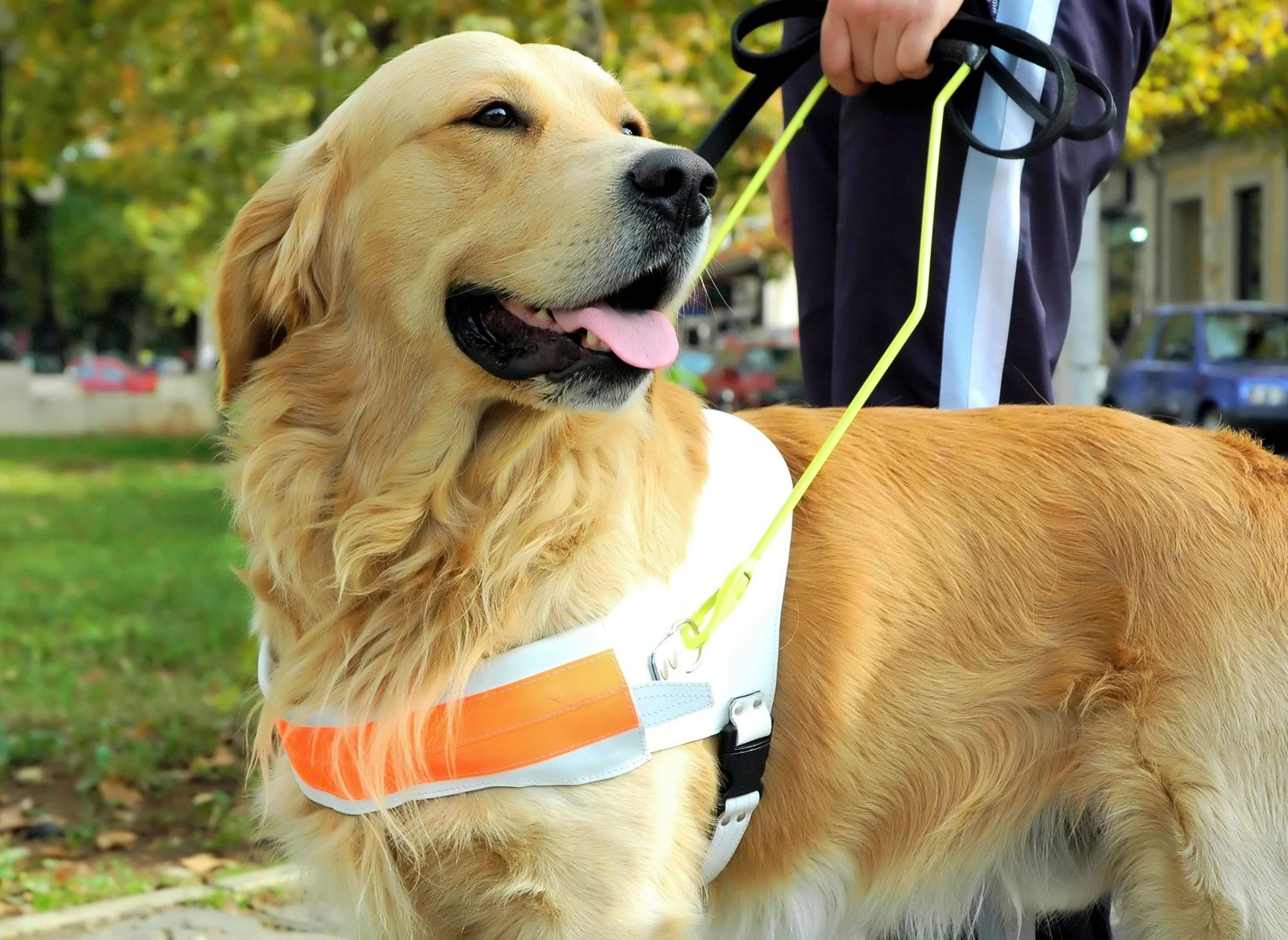 The 10 most useful breeds of working dog that make all of our lives better