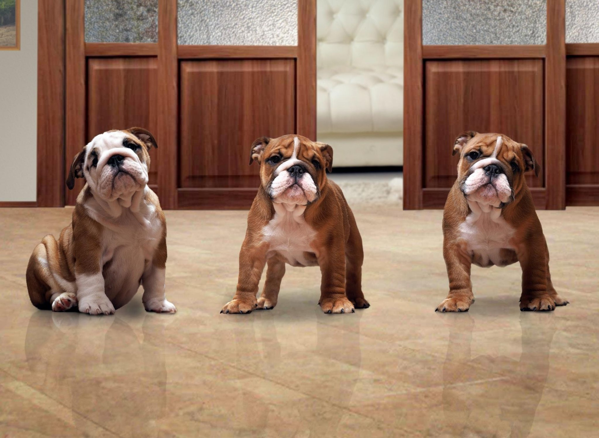 The 10 best adorable dog breeds for people living in a flat or apartment