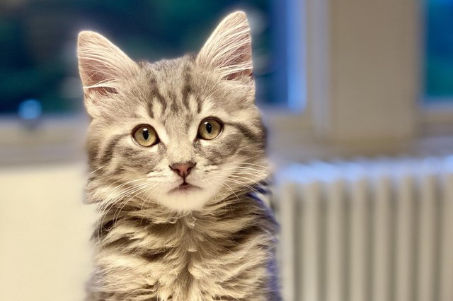 """""""It wasn't me mate,"""" - this little kitten may not have caused much in the way of damage to his owner's home but there are a lot of dogs and cats who have done just that"""