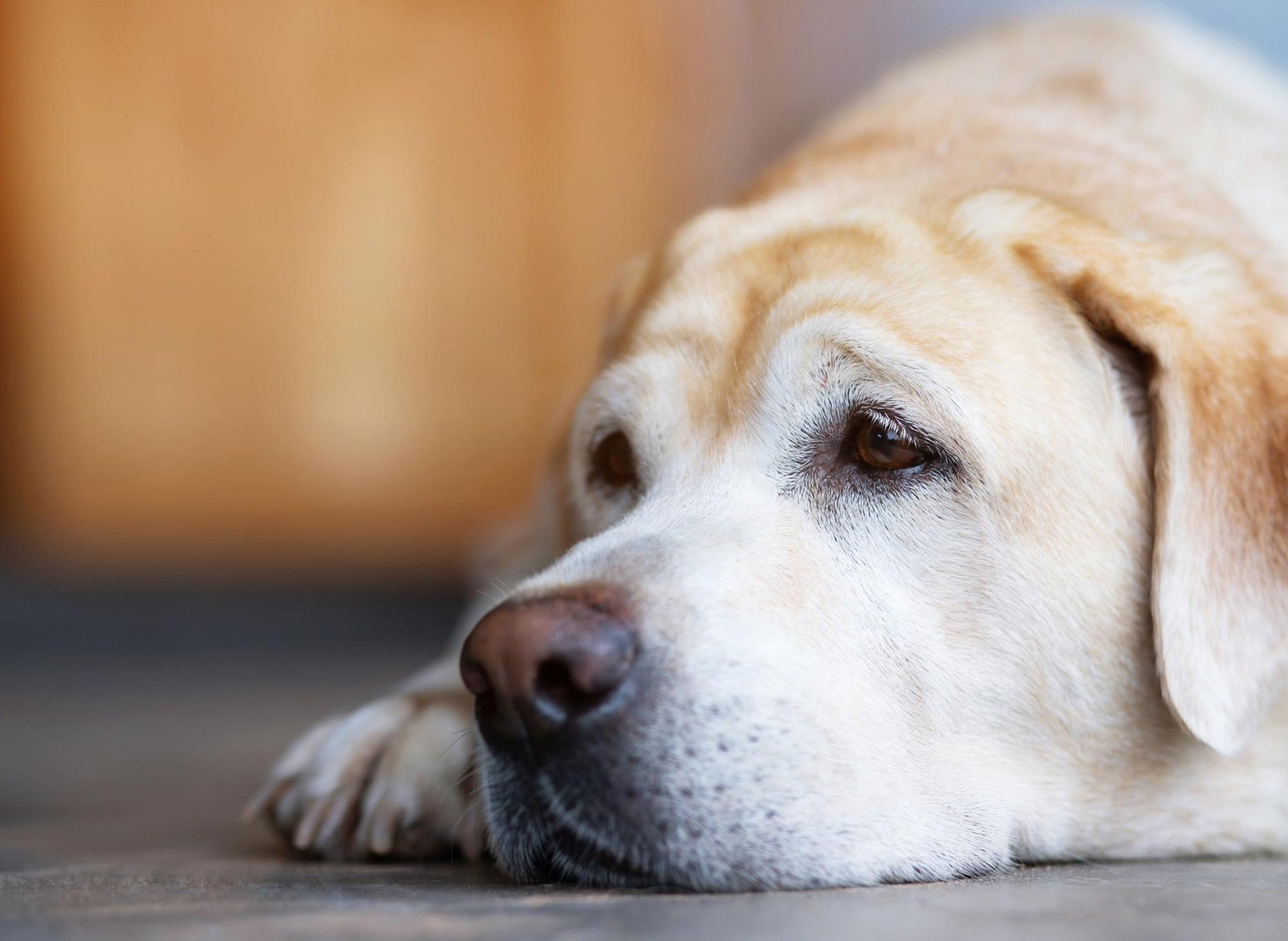 10 breeds of dog most likely to suffer from separation anxiety post-lockdown