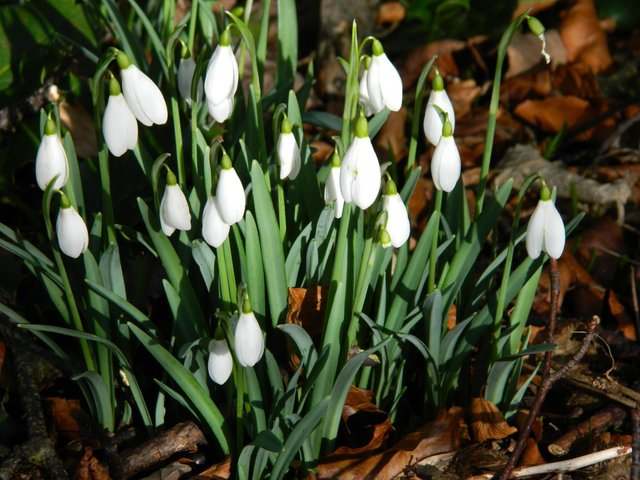 The Snowdrop Appeal was launched in the wake of the Dunblane massacre