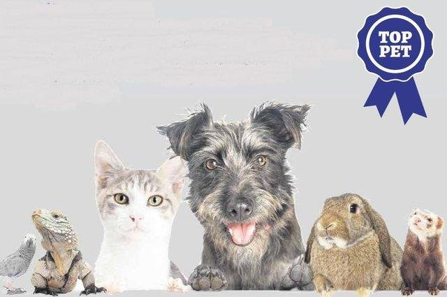 Did your pet make it to the shortlist in our Top Pet competition?