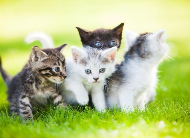 These are the cat names that have proved most popular over lockdown.