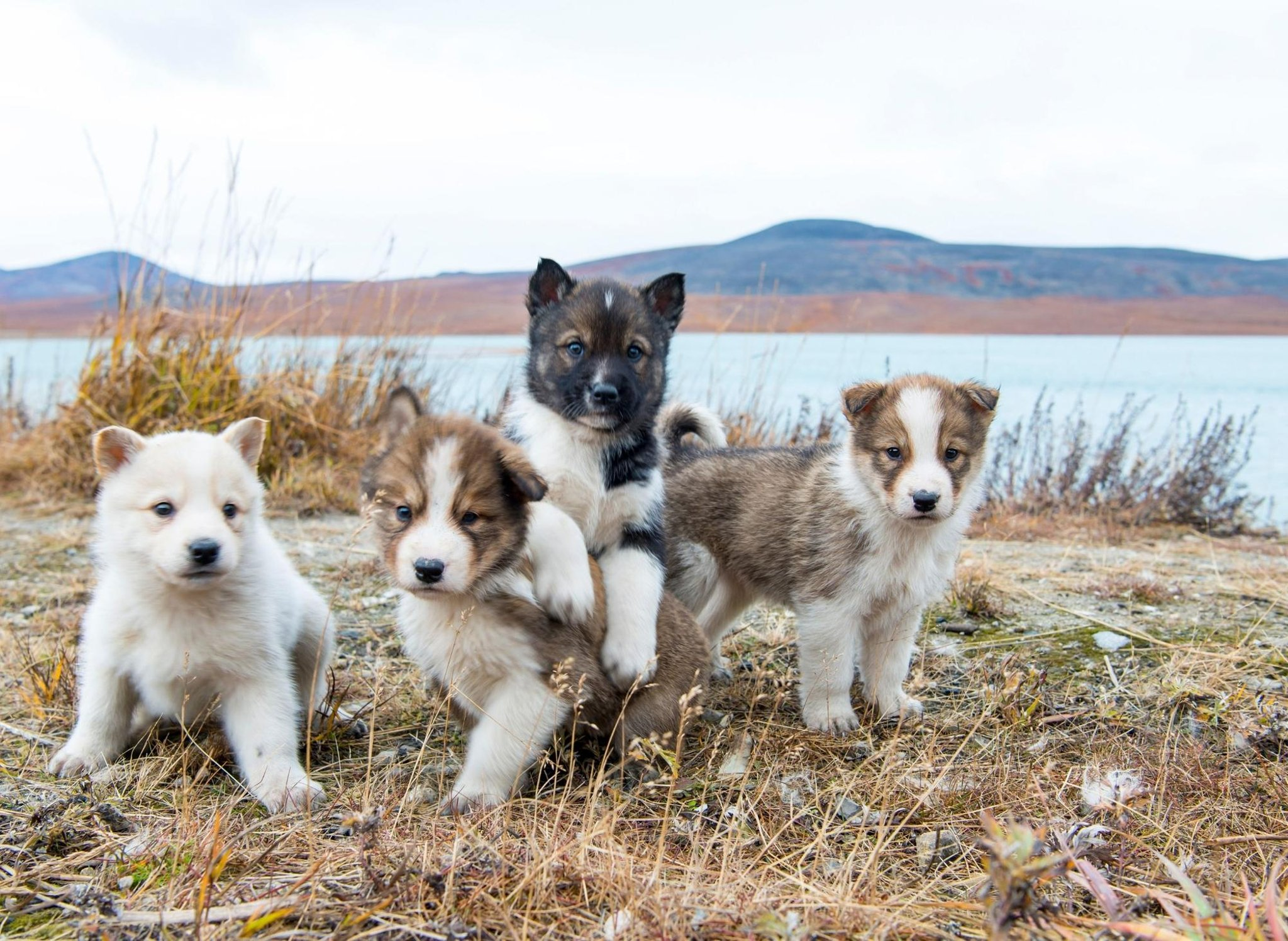 These are the world's 10 most popular male puppy names for adorable dogs