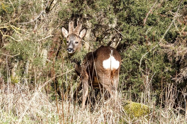 There has been a report of a dog attack in the Carron/Abbotshaugh area which result in the death of a young deer