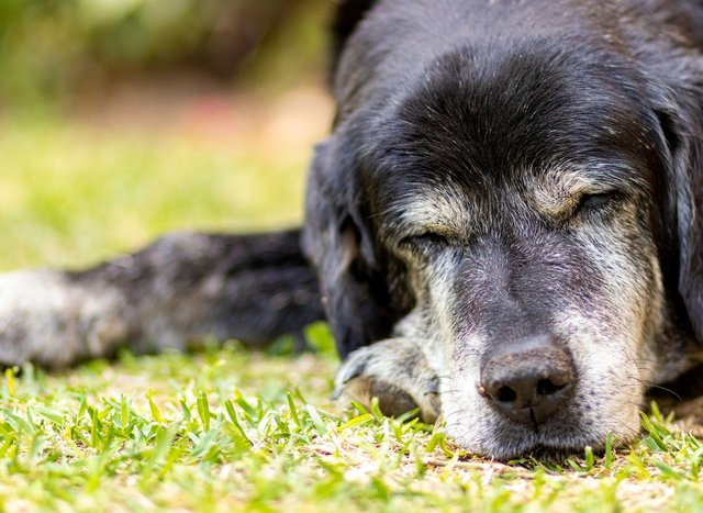 These are the breeds of dog most likely to live to a ripe old age.