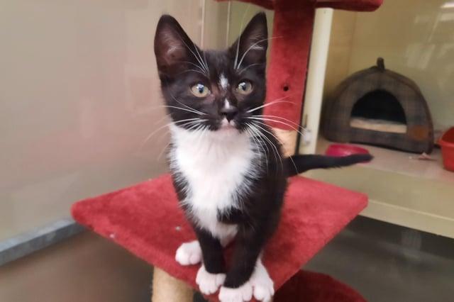 Pixie the kitten was abandoned in Falkirk
