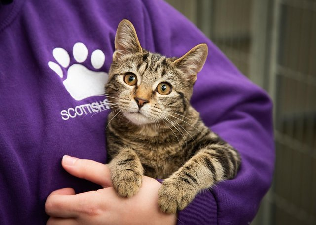 This little fella may be tuning in for the SSPCA April 1 online Pub Quiz for Pets