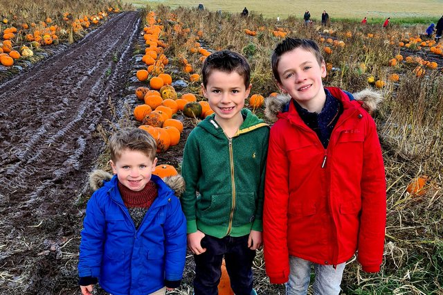 Ezra, Griffin and Jasper Smart made the most of a chance to go pumpkin picking during Forth Valley Food Festival. Contributed.